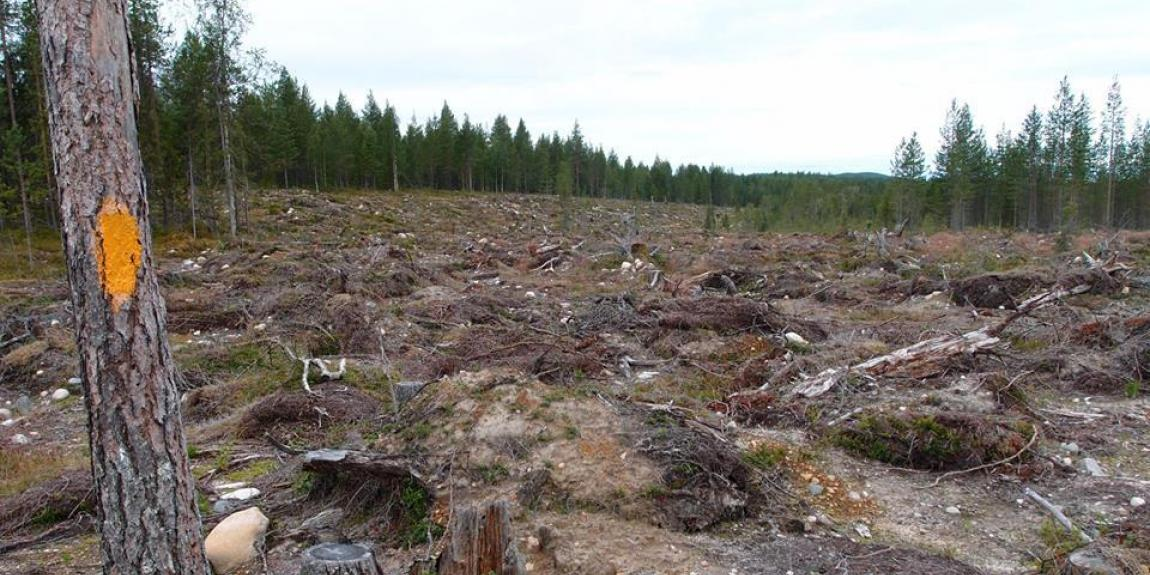 Metsä hakkuu avohakkuu